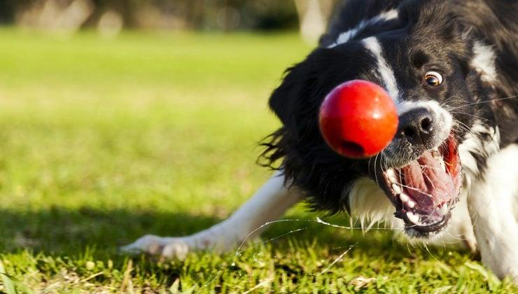 neutering-dog-calm-him-down
