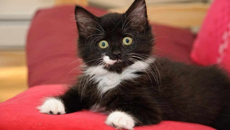 normal-cats-lose-whiskers