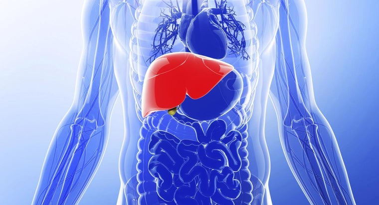 normal-size-liver