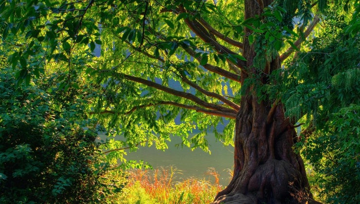 oak-trees-grow