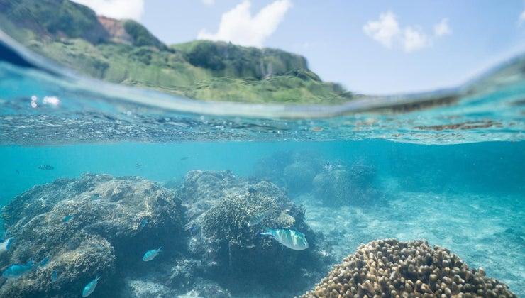 ocean-ecosystems