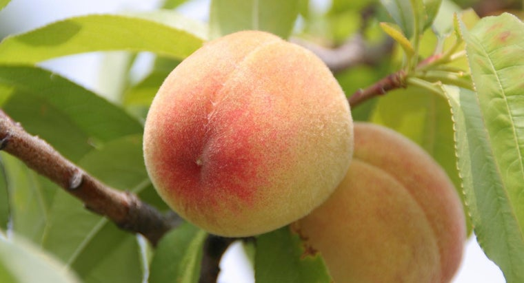 peaches-season