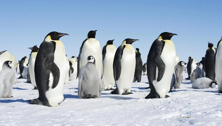 penguins-care-young