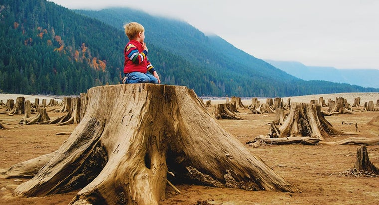 people-harm-rain-forest