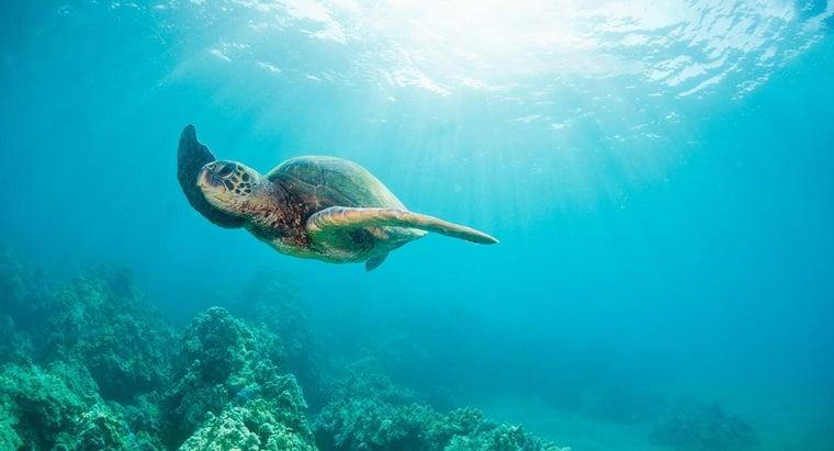 phobia-fear-turtles