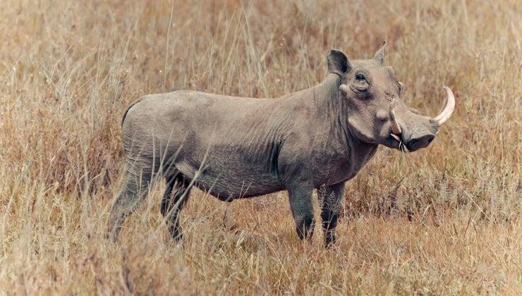 pig-s-habitat
