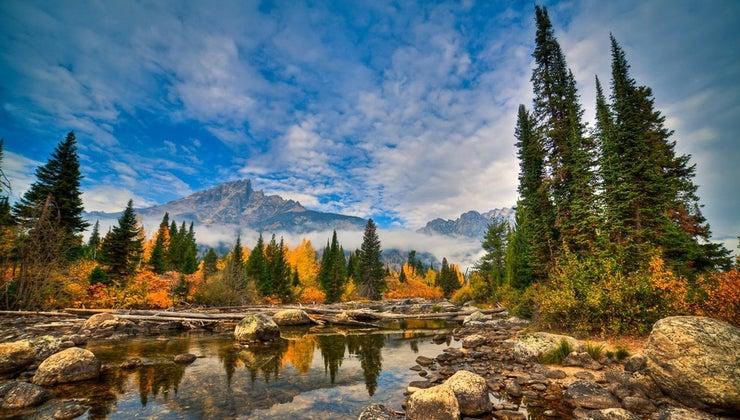 pine-trees-found