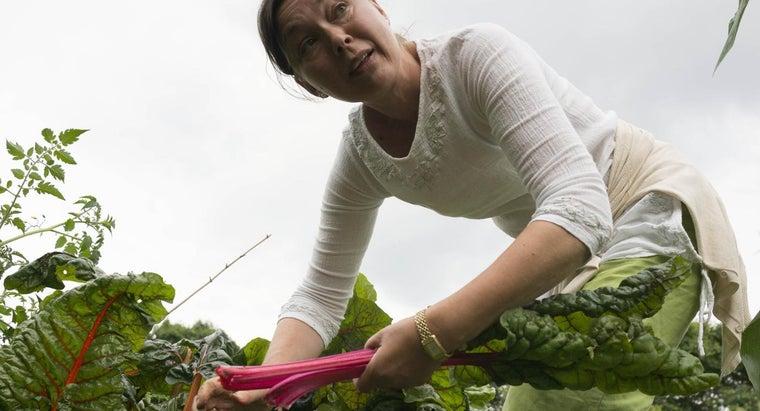 place-plant-rhubarb