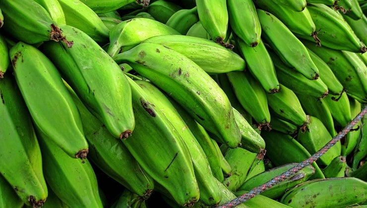 plantains-grow