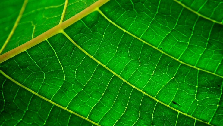 plants-green