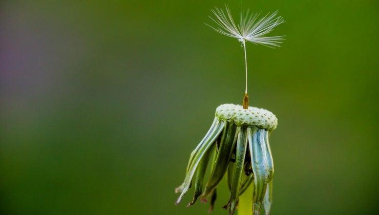 plants-reproduce
