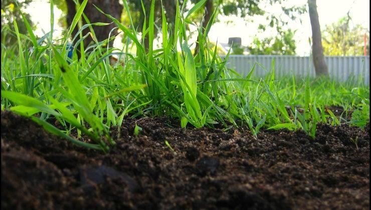 plants-rid-waste