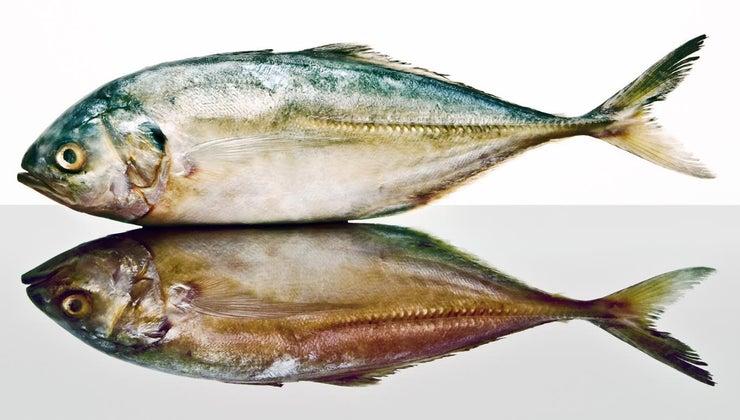 pollock-fish-scales