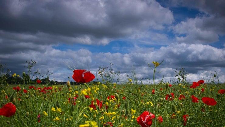 poppy-seeds-dispersed