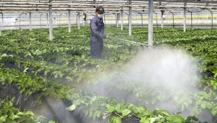 practice-questions-pesticide-exam