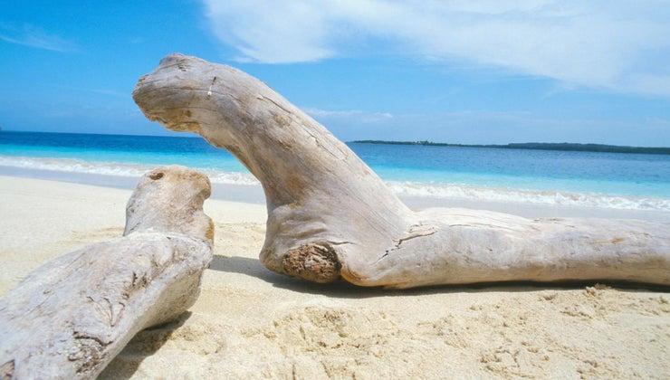 preserve-driftwood