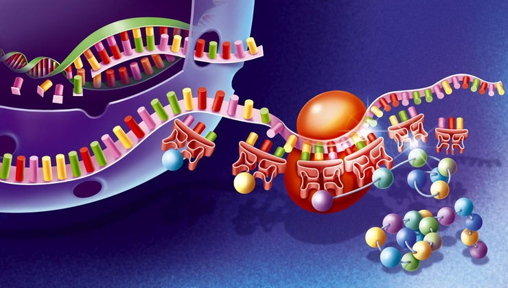 protein-synthesis