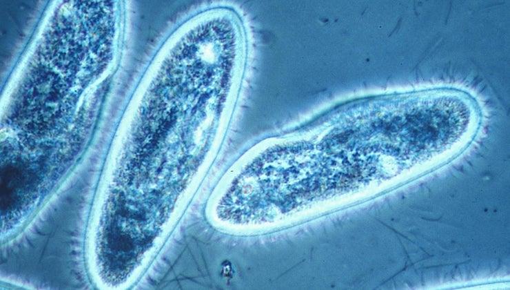 protists-energy