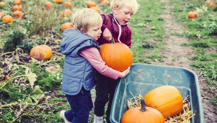 pumpkins-considered-fruit-vegetable