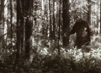 Strange Americana: Does Video Footage of Bigfoot Really Exist?