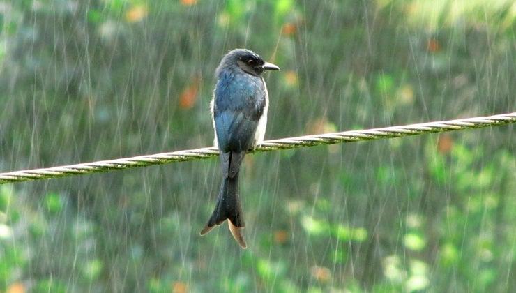 rain-symbolize