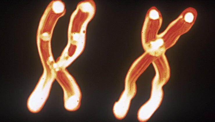 relationship-between-chromosomes-dna-genes