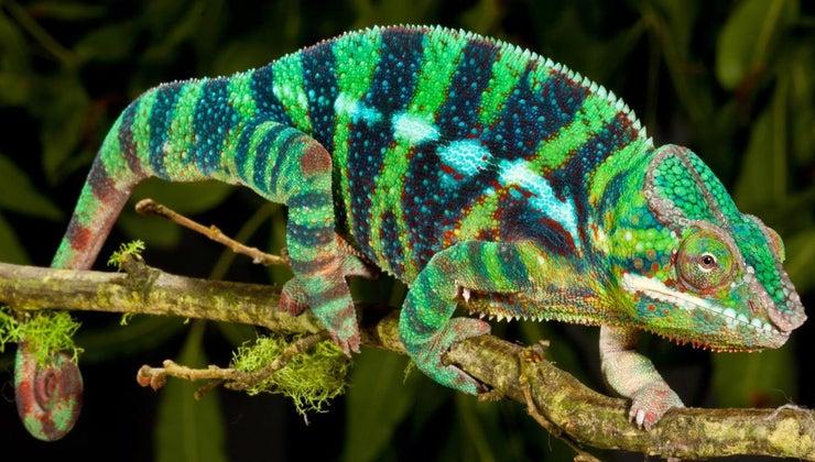 reptiles-live