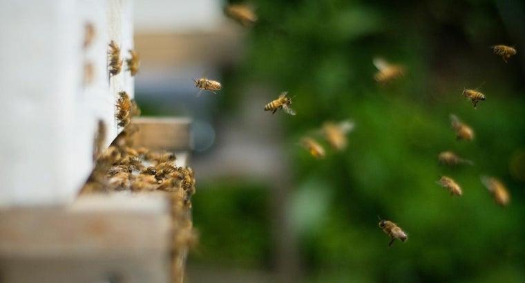 rid-bees-nesting-ground