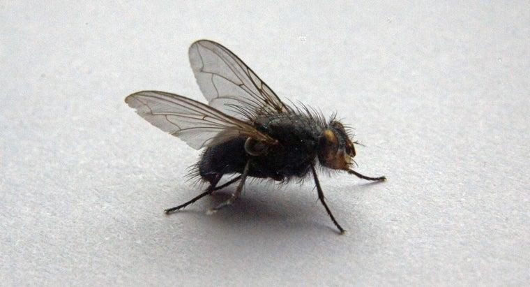 rid-big-flies-house