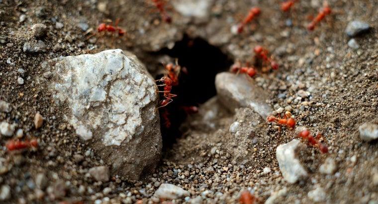 rid-red-ants-garden