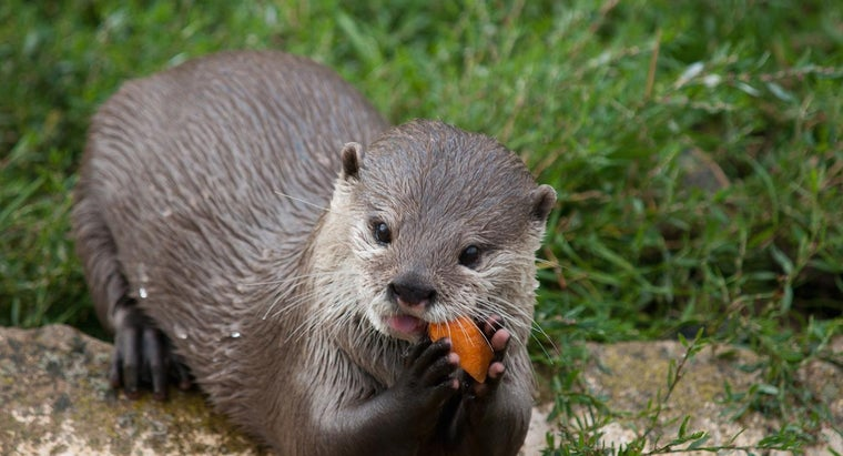 river-otters-eat