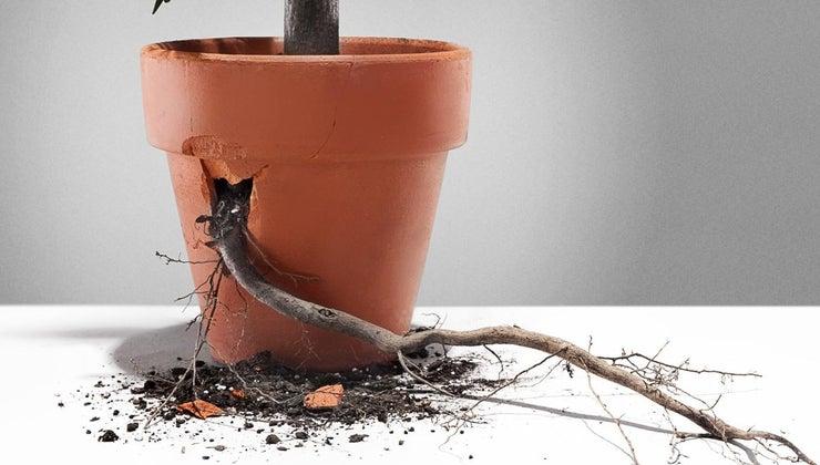 root-plant