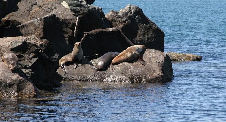 seals-live