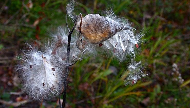 seeds-need-dispersed