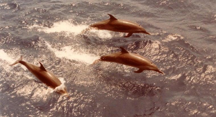 sharks-afraid-dolphins