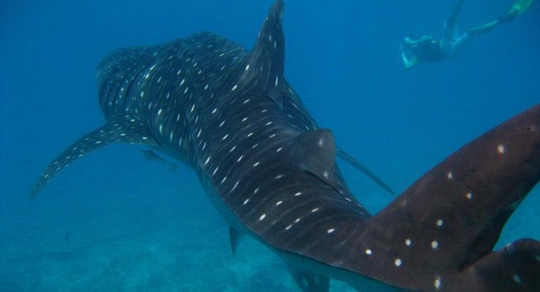 sharks-look-like