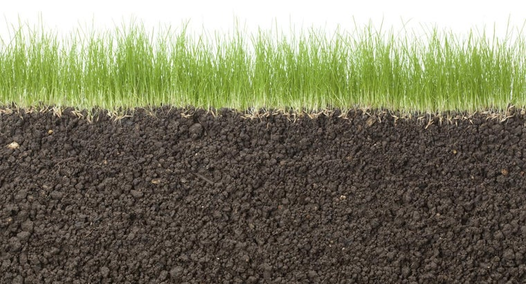 should-plant-grass-seed