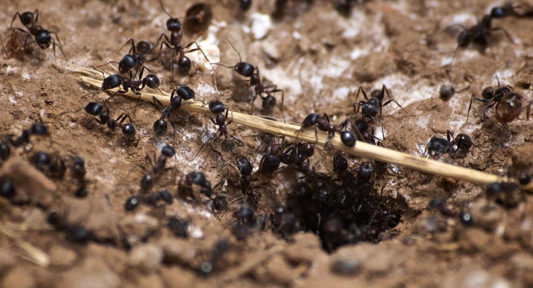 signs-carpenter-ant-infestation