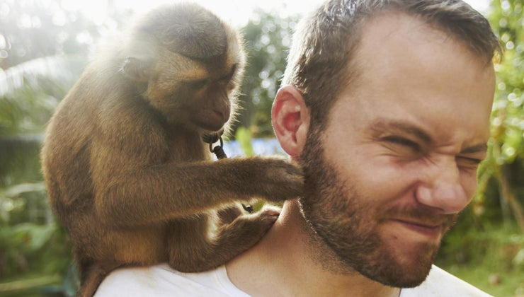 similarities-present-monkeys-humans