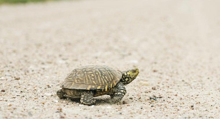 slow-steady-wins-race-mean