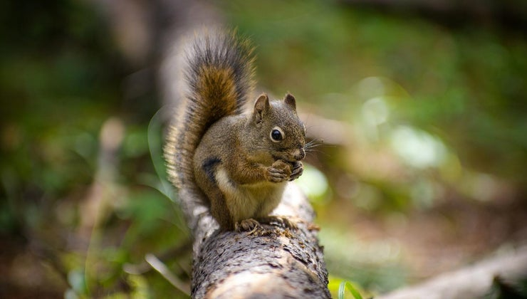 smells-squirrels-hate