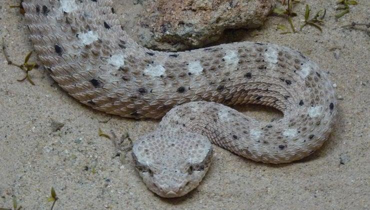 snakes-survive-desert