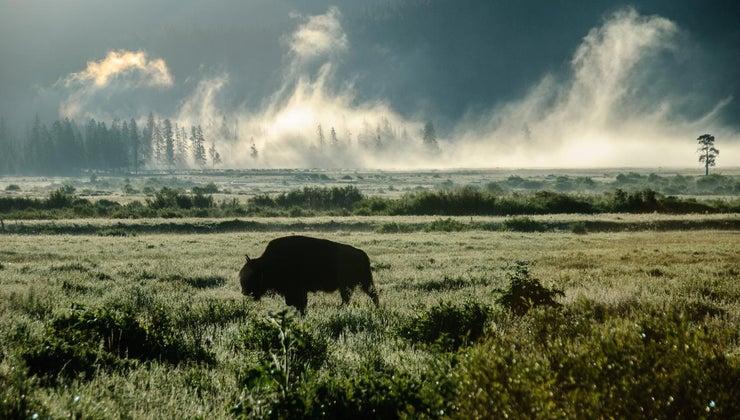 sound-buffalo-make