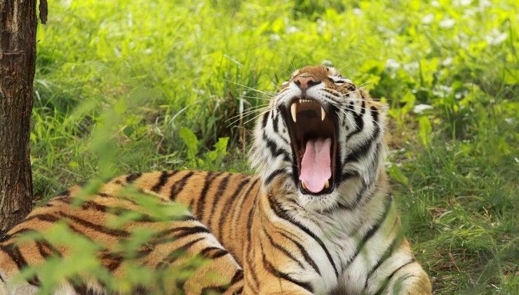 sound-tiger-make