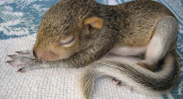 squirrels-sleep-night