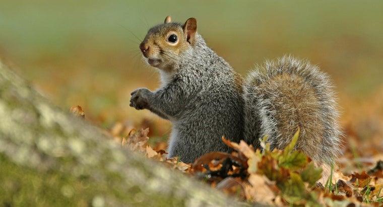 squirrels-sleep