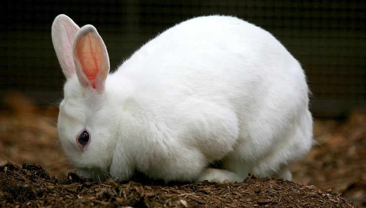 stages-rabbit-s-life-cycle