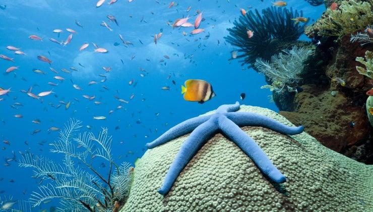 starfish-eat