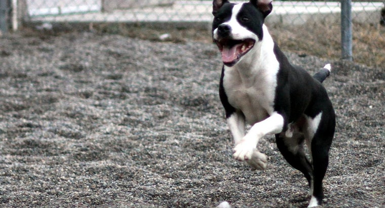 states-banned-pit-bulls