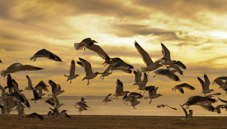 group-seagulls-called